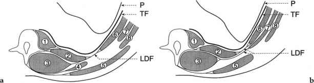 In Particular The T9 L1 Branches Form A So Called Tap Plexus That Runs With Deep Cirflex Iliac Artery This May Partly Account For Ability Of