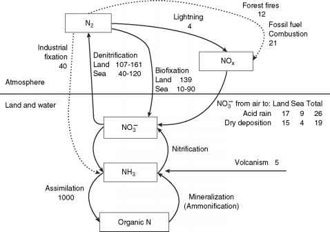 Nitrogen Cycle Wastewater
