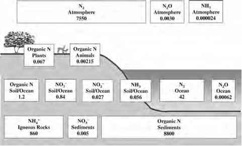 Nitrogen Cycle Ammonification