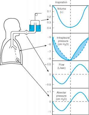 Intrapleural Pressure Lung Volume