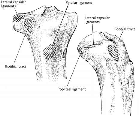 Medial Border Tibia Landmark