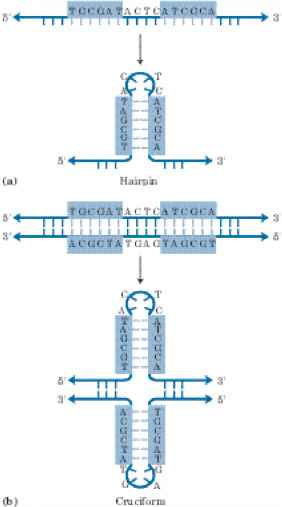 Duplex Cruciform And Triplex Dna
