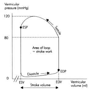 Ventricle Pressure Volume Loops