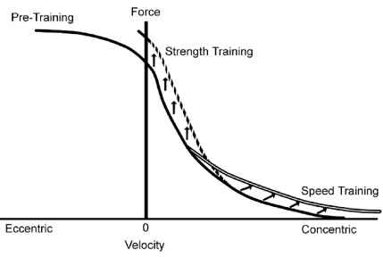 Force Velocity Analysis Strength