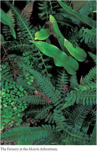 Can Ostrich Ferns Grow Indoors