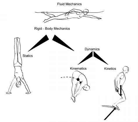 Newtonian Mechanics For Biomechanics