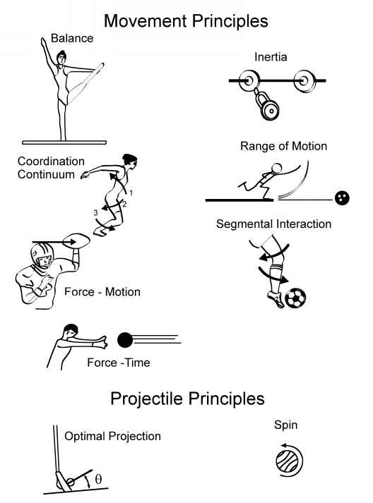 Nine Principles Biomechanics