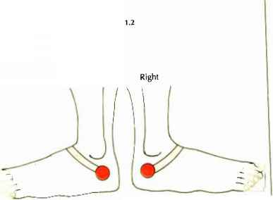 Zone Therapy Reflexology